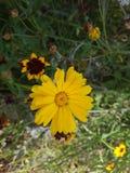 Prado del noroeste del wildflower Imagen de archivo