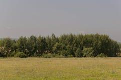 Prado del oro con los árboles verdes lejos y el cielo azul Verano tranquilo Área cultivada Agricultura Buen tiempo de la hierba a Foto de archivo libre de regalías
