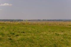 Prado del oro con los árboles verdes lejos y el cielo azul Verano tranquilo Área cultivada Agricultura Buen tiempo de la hierba a Imagen de archivo