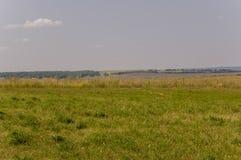Prado del oro con los árboles verdes lejos y el cielo azul Verano tranquilo Área cultivada Agricultura Buen tiempo de la hierba a Imágenes de archivo libres de regalías