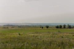 Prado del oro con los árboles verdes lejos y el cielo azul Verano tranquilo Área cultivada Agricultura Buen tiempo de la hierba a Fotos de archivo