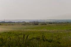 Prado del oro con los árboles verdes lejos y el cielo azul Verano tranquilo Área cultivada Agricultura Buen tiempo de la hierba a Fotos de archivo libres de regalías
