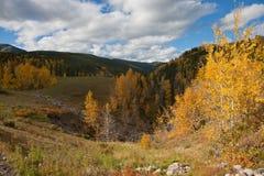 Prado del otoño Imagen de archivo libre de regalías