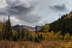 Prado del otoño Fotografía de archivo