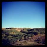 Prado del otoño con el cielo azul claro Foto de archivo libre de regalías
