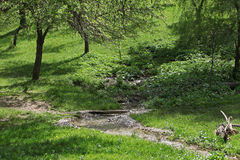 Prado del país en tiempo de primavera Fotos de archivo