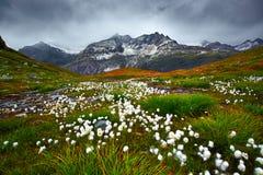 Prado del paisaje de la montaña Foto de archivo libre de regalías