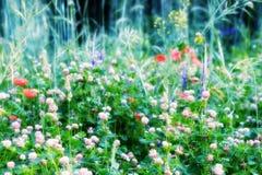 Prado del verano, campo de hierba con las flores coloridas, concepto del fondo de la naturaleza, foco suave Imágenes de archivo libres de regalías
