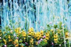 Prado del verano, campo de hierba con las flores coloridas, concepto del fondo de la naturaleza, foco suave, colores surrealistas Imagen de archivo libre de regalías