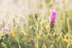 Prado del verano, campo de hierba con las flores coloridas, concepto del fondo de la naturaleza, foco suave, tonos en colores pas Imagen de archivo