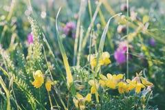 Prado del verano, campo de hierba con las flores coloridas, concepto del fondo de la naturaleza, foco suave, tonos en colores pas Imagen de archivo libre de regalías