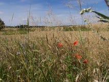 Prado del verano con la hierba marchitada Fotos de archivo