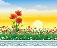 Prado del verano con las amapolas y las margaritas ilustración del vector