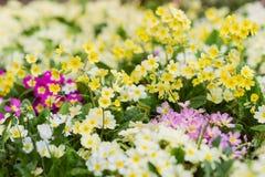 Prado del verano con las flores coloridas Fondo soleado de la naturaleza Imágenes de archivo libres de regalías
