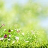 Prado del verano de la belleza con las flores florecientes fotografía de archivo libre de regalías