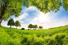 Prado del verano rodeado por los árboles con el cielo azul y el sol brillante Imagen de archivo