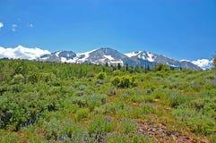 Prado del wildflower de la montaña foto de archivo libre de regalías