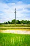 Prado do arroz Fotos de Stock Royalty Free