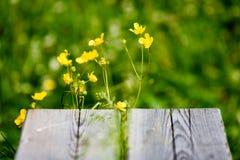 prado do campo dos plenos verões com flores Imagem de Stock