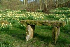 Prado do Daffodil, Scotland fotografia de stock royalty free