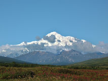 Prado do Fireweed na frente de Mt. McKinley Foto de Stock