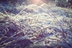 Prado do inverno imagem de stock