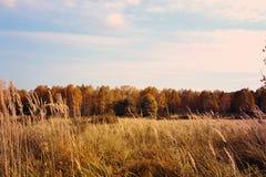 Prado do outono com a floresta no fundo Imagens de Stock Royalty Free