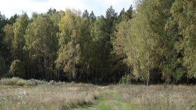 Prado do outono na frente do bosque do vidoeiro video estoque