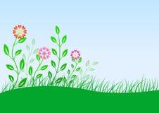 Prado do verão com flores Fotografia de Stock