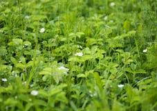 Prado do verão com flores da morango fotos de stock royalty free