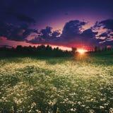 Prado do verão no crepúsculo fotografia de stock royalty free