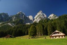 Prado do verão nos alpes Fotografia de Stock Royalty Free
