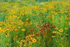 Prado do Wildflower do verão Imagem de Stock