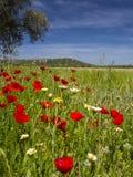 Prado do Wildflower no Algarve Fotos de Stock