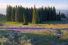 Prado dos wildflowers em montanhas do Conselho fotos de stock