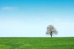Prado e árvore verdes da mola Fotografia de Stock
