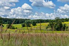 Prado e céu do verão Imagem de Stock Royalty Free