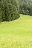 Prado e floresta em Trentino - Itália Fotos de Stock Royalty Free