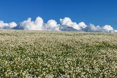 Prado e nuvens Foto de Stock Royalty Free