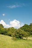 Prado e o céu Foto de Stock Royalty Free