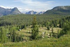 Prado em montanhas de San Juan em Colorado Fotografia de Stock Royalty Free