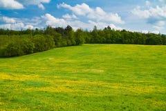 Prado em um monte com floresta e céu fotos de stock