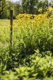 Prado en día soleado con vallas de estacas de madera y flores amarillas Fotos de archivo libres de regalías