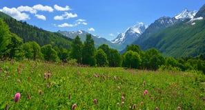 Prado en el Cáucaso Fotos de archivo libres de regalías