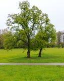 prado en el parque Fotografía de archivo