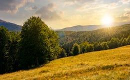 Prado en la colina boscosa en montaña en la puesta del sol Imagenes de archivo