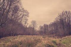 Prado en un bosque en el amanecer Imagenes de archivo