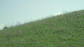 Prado en una ladera a principios de verano metrajes