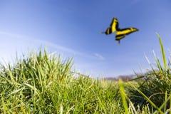prado en verano Imagen de archivo libre de regalías