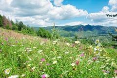 Prado ensolarado com flores selvagens imagem de stock royalty free